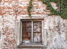 La ventana de madera vieja con la hiedra en la pared Fotografía de archivo