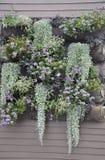 La ventana florece el centro de la ciudad de la jardinera adentro de Portsmouth en New Hampshire de los E.E.U.U. Imagen de archivo libre de regalías