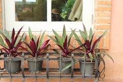 La ventana fue adornada con una planta en conserva Imágenes de archivo libres de regalías