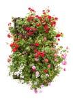 La ventana típica adornó las flores rosadas y rojas, España, Europa Imagenes de archivo