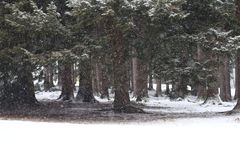 La ventisca del bosque Nevado hace el paisaje que encanta imagen de archivo libre de regalías