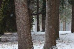 La ventisca del bosque Nevado hace el paisaje que encanta fotos de archivo