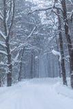 La ventisca en el bosque o el parque del invierno con la nieve que cae fotografía de archivo libre de regalías