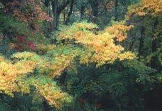 La venuta dell'autunno fotografia stock libera da diritti