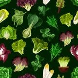 La verdura de hoja, ensalada pone verde el modelo inconsútil Fotografía de archivo libre de regalías