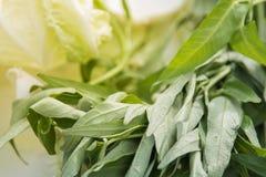 La verdura degli spinaci dell'acqua di verde del primo piano va per cucinare immagini stock libere da diritti