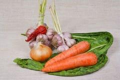La verdura fresca dall'orto Fotografie Stock Libere da Diritti