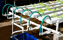 La verdura idroponica organica Fotografie Stock