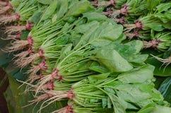 La verdura locale nel mercato dell'alimento fresco Fotografia Stock Libera da Diritti