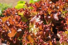 La verdura pone verde el primer Fotografía de archivo libre de regalías