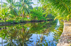 La verdure au canal du ` s de Hamilton, Sri Lanka photographie stock libre de droits