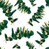 La verdure d'eucalyptus part du modèle sans couture Image libre de droits