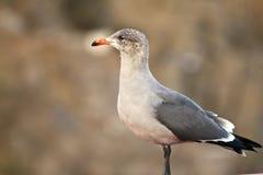 La verticale d'un oiseau images libres de droits