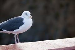 La verticale d'un oiseau image stock