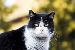 La verticale de chat Photographie stock