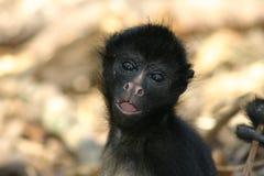 La verticale du singe Photos libres de droits