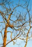 La vertiente deja el árbol contra el cielo Imagen de archivo