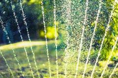 La vertiente del agua salpica y bokeh del riego en jardín del verano con la regadera en césped de la hierba y fondo del árbol imágenes de archivo libres de regalías