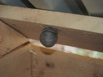 La vespa costruisce un insetto pericoloso del nido sferico fotografia stock