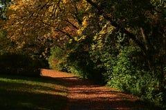 La via di autunno in arboreto coperto di foglie cadute arancio, prendenti il sole in sole di pomeriggio, ingiallisce gli alberi c Immagine Stock