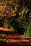 La via di autunno in arboreto coperto di foglie cadute arancio, prendenti il sole in sole di pomeriggio, ingiallisce gli alberi c Fotografia Stock