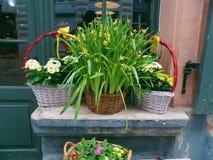La via fiorisce sulla via della città di Leopoli Fotografie Stock