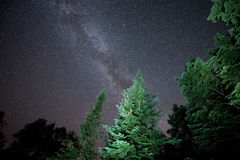 La Via Lattea e gli alberi Fotografie Stock Libere da Diritti