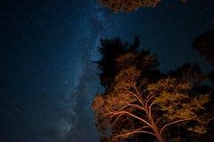 La Via Lattea e gli alberi Fotografia Stock Libera da Diritti