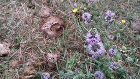 La vida crece del fertilizante - flores Foto de archivo libre de regalías