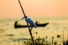 La vida de los pájaros en los shors del lago Imagen de archivo