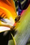 La vida de una abeja Imágenes de archivo libres de regalías