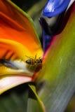 La vida de una abeja Fotografía de archivo