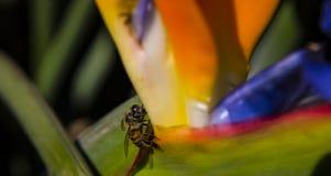 La vida de una abeja Imagen de archivo libre de regalías