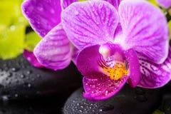 La vida del balneario todavía de ramas hermosas peló la orquídea de la lila Fotografía de archivo