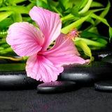 La vida del balneario todavía del hibisco rosado florece y las ramitas de bambú en zen Fotografía de archivo