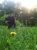 La vida del perro Imagen de archivo libre de regalías