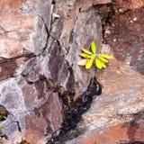 La vida encuentra una manera en grieta de la roca Imagen de archivo libre de regalías