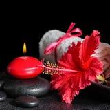 La vida hermosa del balneario todavía del hibisco rojo florece con el rocío, vela Fotografía de archivo libre de regalías