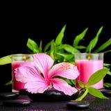 La vida hermosa del balneario todavía del hibisco rosado florece, bambú de la ramita Imagen de archivo