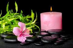 La vida hermosa del balneario todavía del hibisco rosado florece, bambú de la ramita Foto de archivo