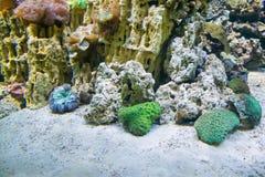 La vida marina Foto de archivo libre de regalías