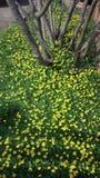 La vida salvaje por el camino, arbustos amarillos de las flores imágenes de archivo libres de regalías
