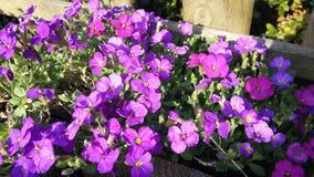 La vida salvaje por el camino, arbustos púrpuras de las flores fotografía de archivo libre de regalías