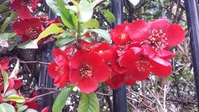La vida salvaje por el camino, arbustos rojos de las flores imagen de archivo libre de regalías