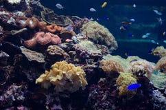 La vida subacuática Fotos de archivo