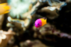 La vida subacuática Fotos de archivo libres de regalías