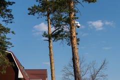 La videocamera di sicurezza del CCTV ? montata su un tronco di albero nel concetto della foresta di controllo totale e di sorvegl immagini stock