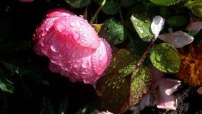 La vie après pluie latvia Saulkrasti Photo libre de droits