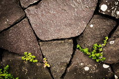 La vie au delà du mur en pierre Photographie stock