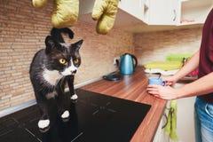 La vie avec le chat Images libres de droits